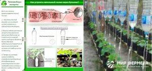 Советы любителям огорода и сада